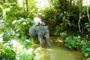 Elefanten-wanderungs-tour