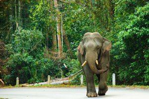 Khao Yai Nationalpark