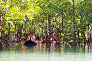 Panak Inseln Mangroven Sumpf