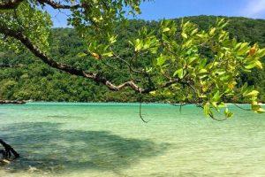 Vegetation und grünes Wasser bei Surin